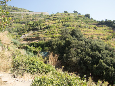 Cinque Terre trail, hillside vineyard