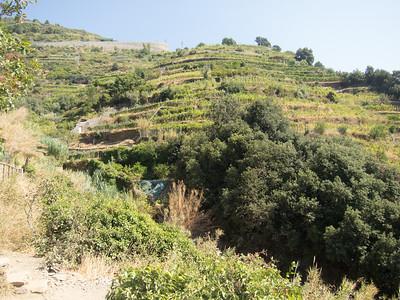 Cinque Terre trail, hillside vineyard
