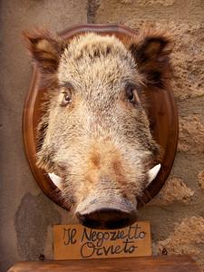 Mounted boar's head, Orvieto