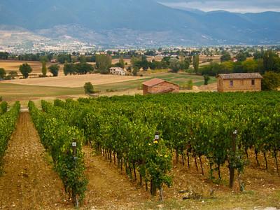 Tabarrini Winery vineyards, near Montefalco