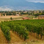 Tabarrini Winery