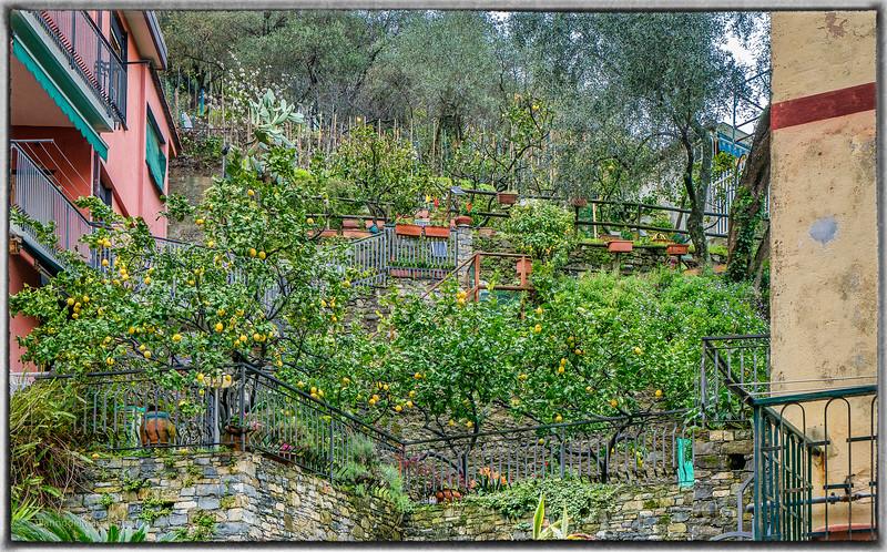 Monterosso Lemon Grove