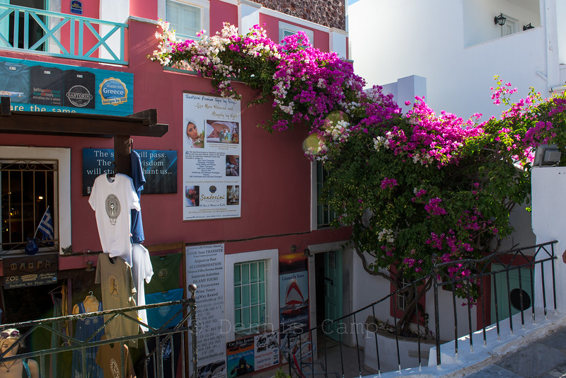 Santorini Greece  Flowers