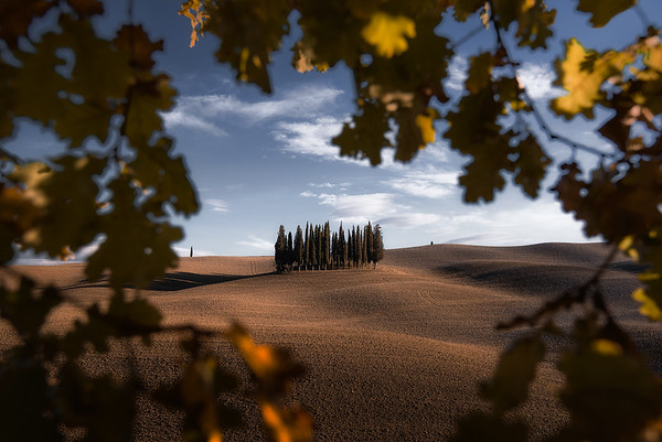 Fall foliage frames cypress trees in Val D'orcia - Tuscany