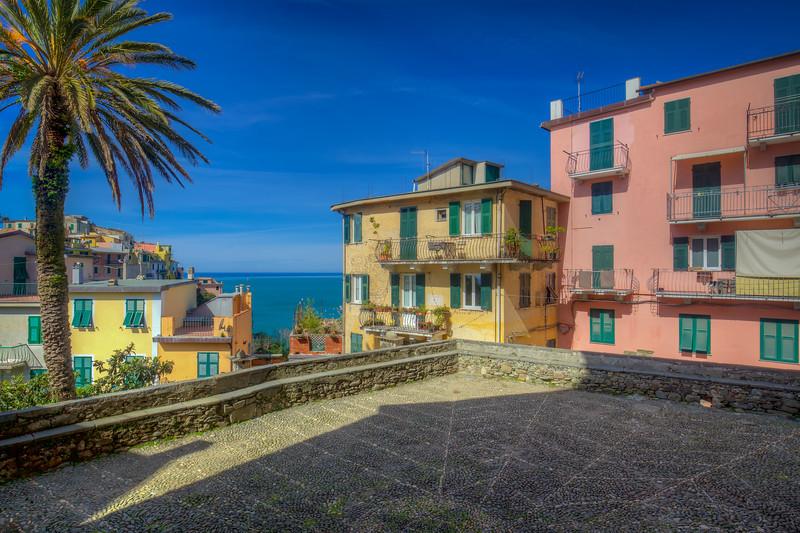Palm Tree, Corniglia Cinque Terre