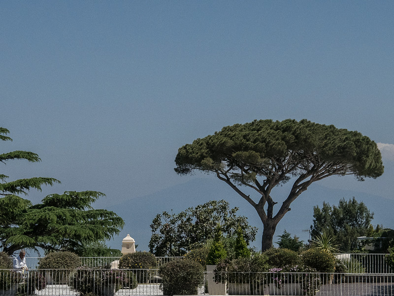 Typical scenery - Capri with Maritime Pine