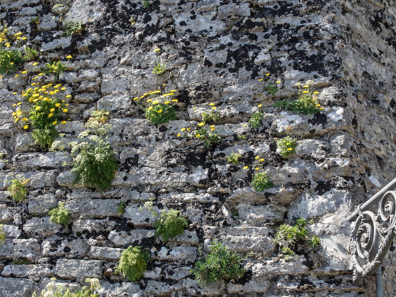 Castello Pepoli walls with local vegetation - built upon walls from 1200 BC and Carthaginian walls