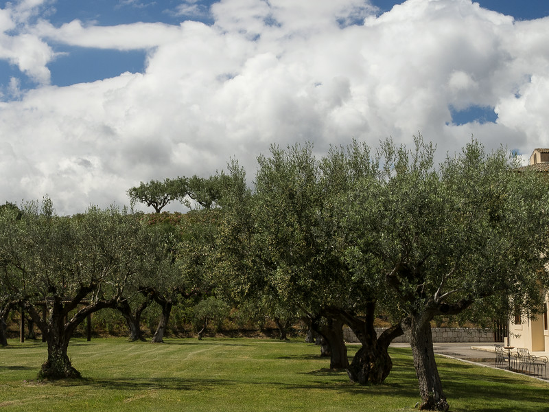 Winery with Olive trees