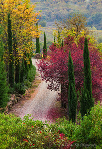 Tuscany Fall Colors