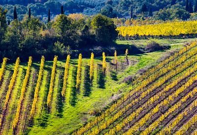 Vineyards of Diagonal Patterns