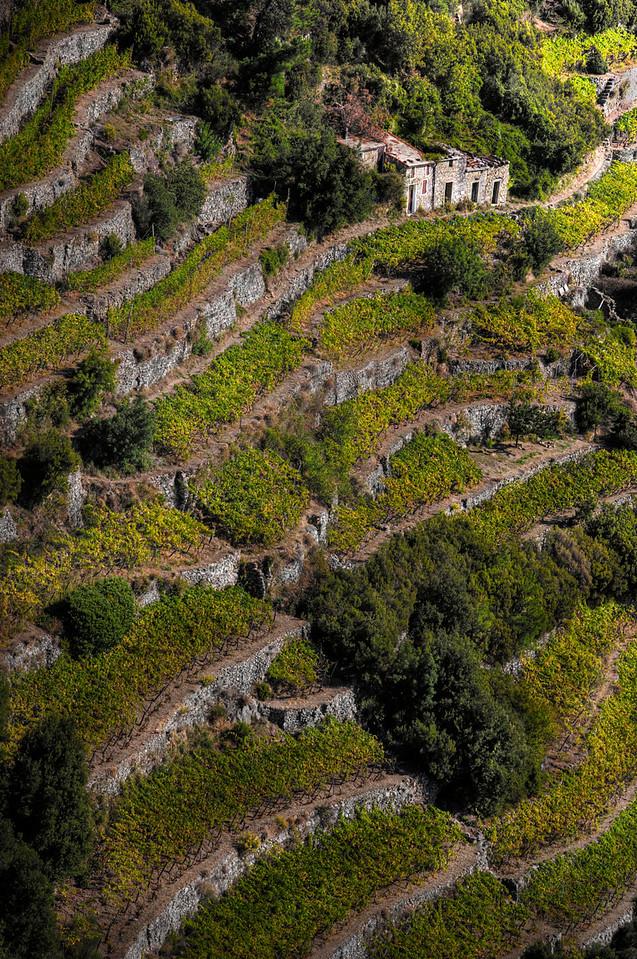 Vinyard; Cinque Terre; Italy