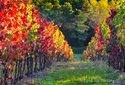 Vineyard Closeup
