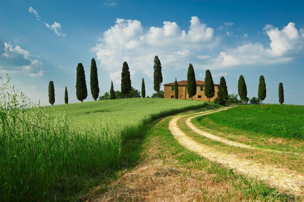 Road leading to villa; Pienza; Tuscany; Italy