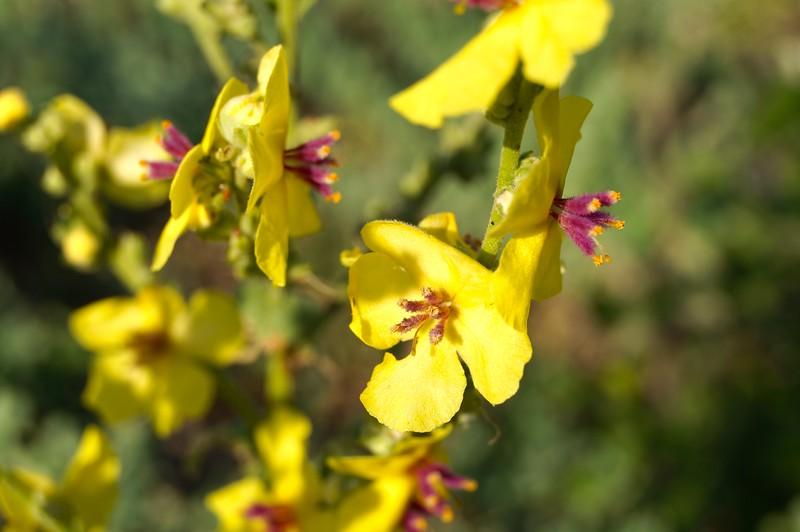 Flowers on Patmos