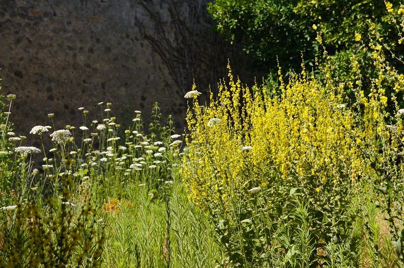 Pompeii flowers