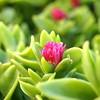 Flora of Mykonos