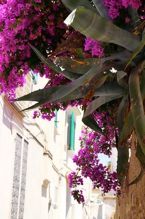 Flora of Capri