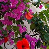 Flora of Santorini