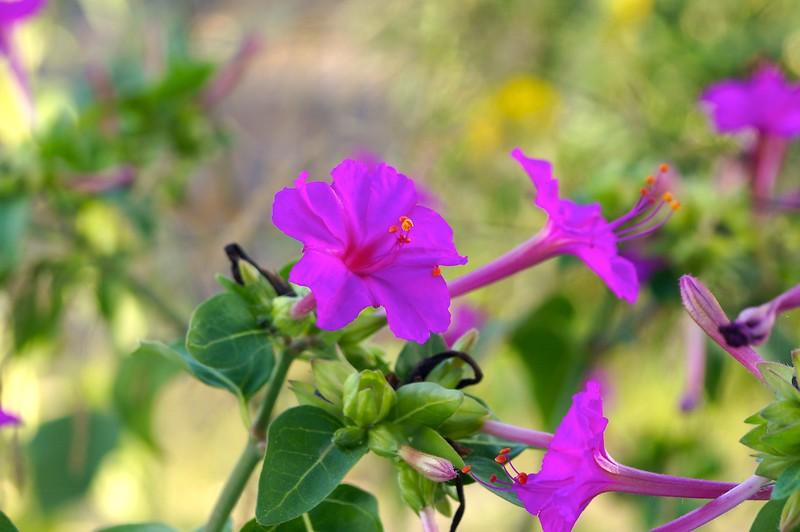 Flowers of Patmos 6