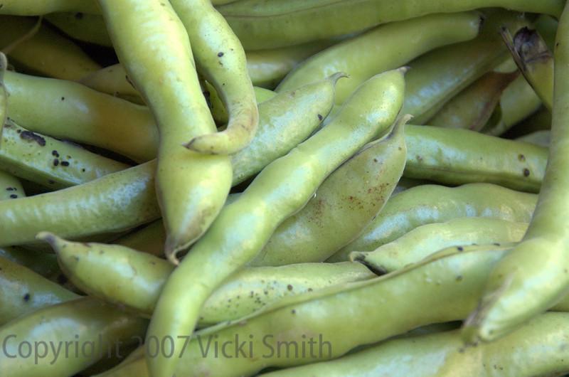 Green Beans - Bologna, Italy