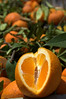 Oranges in Sicily