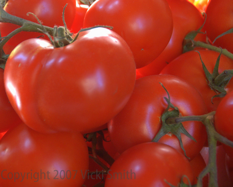 Winter Tomatoes, Bologna, Italy
