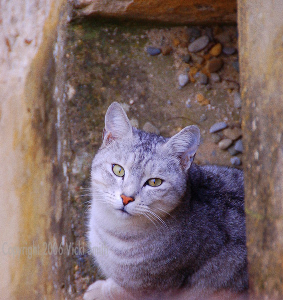 A cat that lives in the church graveyard.  He was really friendly and must have weighed 12 pounds.  He had a hidey hole in the church wall which is where he was when I shot this.