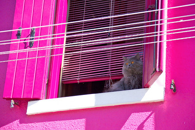 Cat at the window, Burano, Venice