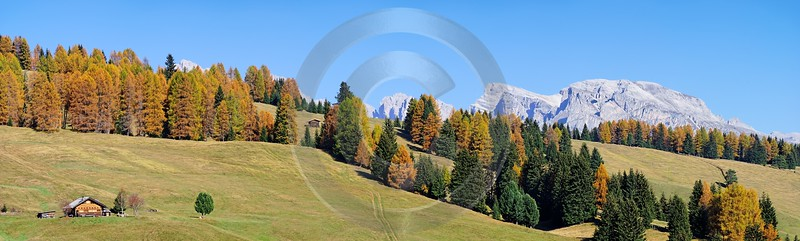 Seiser Alm Alpe Di Siusi Fine Art Photography Gallery Western Art Prints For Sale Flower - 000443 - 27-10-2006 - 12369x3720 Pixel
