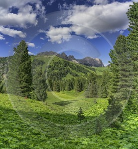 Passo Gardena Groedner Joch Pass Sassolungo Langkofel Summer Forest Rock Color Nature - 024852 - 16-06-2018 - 7589x8215 Pixel