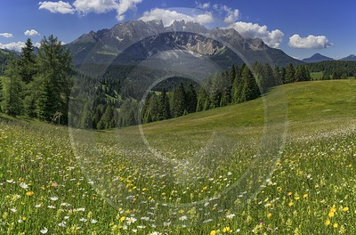 Passo Nigra Nigerpass Summer Tree Color Dolomites Panorama Sunshine Fine Art Prints For Sale - 024858 - 16-06-2018 - 12113x8000 Pixel