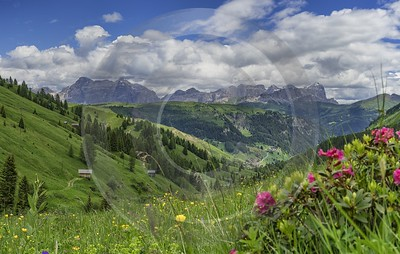 Passo Pordoi Pass Summer Dolomites Panoramic Alps Flower Fine Art Printing - 024934 - 18-06-2018 - 11014x6997 Pixel