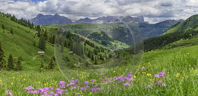 Passo Pordoi Pass Summer Dolomites Panoramic Alps Flower Fine Art Prints Outlook - 024942 - 18-06-2018 - 15684x7602 Pixel