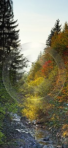 Seis Herbst Laub Baum Sonne Wald Bach Panorama Modern Wall Art Royalty Free Stock Images Autumn - 001214 - 14-10-2007 - 3913x8460 Pixel