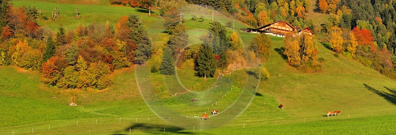 Seis Herbst Laub Baum Sonne Wald Panorama Kuehe View Point Photography Prints For Sale Mountain - 001210 - 14-10-2007 - 7521x2577 Pixel
