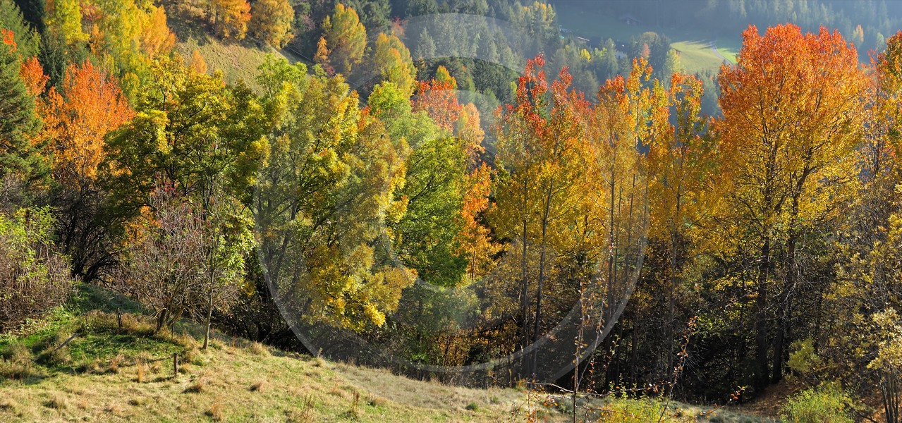Seis Herbst Laub Baum Sonne Wald Panorama Fine Art America Images Art Photography For Sale - 001203 - 14-10-2007 - 9050x4244 Pixel