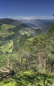 Tires Tiers Summer Tree Color Dolomites Panorama Viepoint Outlook Art Printing Park Grass Town - 024812 - 15-06-2018 - 7669x12174 Pixel