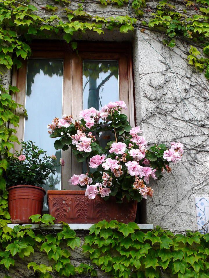 36. Pink Azaleas in window in Ravello