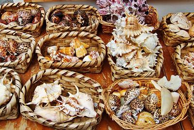 Amalfi_Sea_shells_D3S0149
