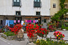 Decorative geraniums and roses in the village of Massa Lubrense, Italy.