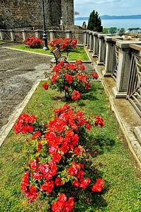 """Roses Above the Lake"" - Bolsena"
