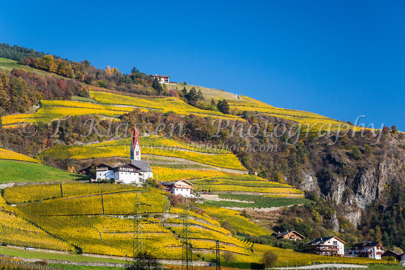 Terraced vineyards near the village of Brixen in South Tyrol, Italy, Europe.