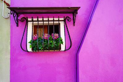 Burano_window_3Crysanthimums_D3S4736