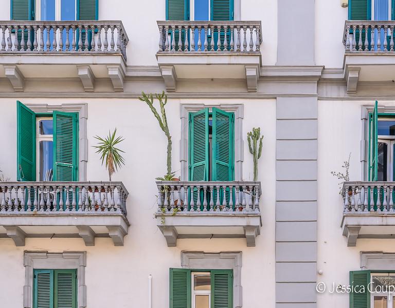 Cacti Growing on the Balcony