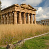 Paestum - Temple of Neptune