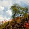Vesuvius Lava Rock