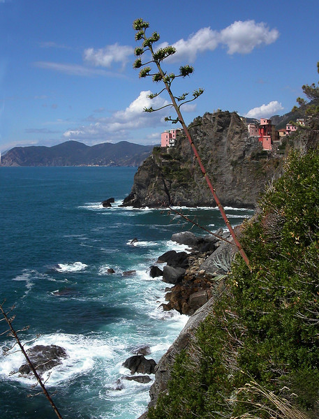 39. Walk on Cinque Terra with tree