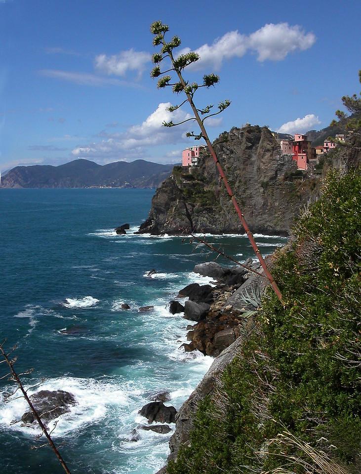 39. Walk on Cinque Terra with tree