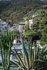 Vegetation on the coast in Monterosso al Mare, Liguria, Italy, Europe.