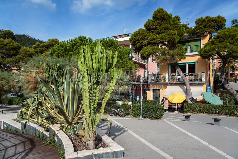 Vegetation on the coast in Monterosso al Mare, Liguria, Italy, Europe.